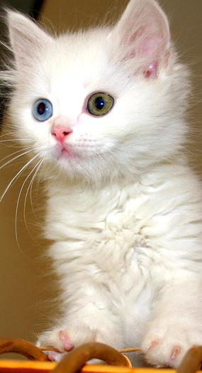 cat.fw